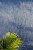 blåa caymanleafs gömma i handflatan skyen Arkivbilder