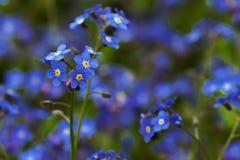 Blåa charmiga små blommor royaltyfri bild