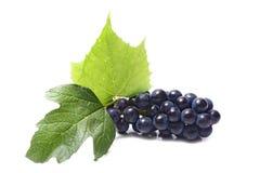blåa druvor arkivfoton