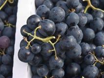 blåa druvor Arkivfoto