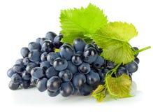 Blåa druvor för klunga med det gröna bladet royaltyfri fotografi