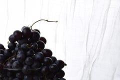 Blåa druvor, ljus bakgrund Fotografering för Bildbyråer