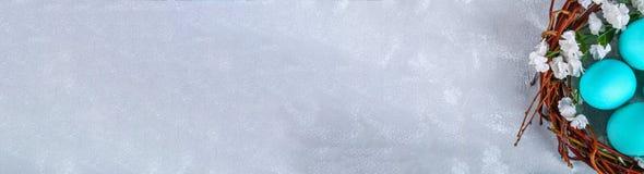 Blåa easter ägg i ett rede med vita blommor på grånar konkret bakgrund baner Royaltyfria Bilder