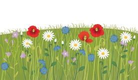 blåa fältblommor gräs ängskysommar under Arkivbild