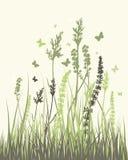 blåa fältblommor gräs ängskysommar under Royaltyfri Foto