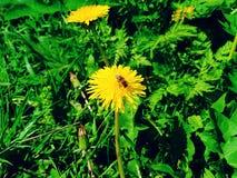 blåa fältblommor gräs ängskysommar under Royaltyfri Fotografi