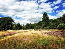 blåa fältblommor gräs ängskysommar under Fotografering för Bildbyråer