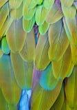 blåa färger befjädrar green Royaltyfri Foto