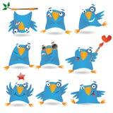 blåa fåglar Royaltyfri Foto