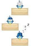 Blåa fåglar på trätecknet - Set 1 Arkivbilder