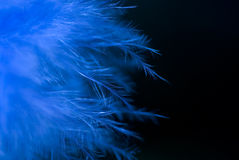 blåa fjädrar Fotografering för Bildbyråer