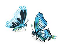 Blåa fjärilar på vit Arkivfoto