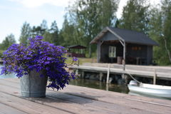 Blåa florets Royaltyfri Foto