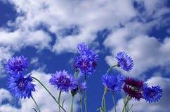 blåa flowerses Arkivbilder