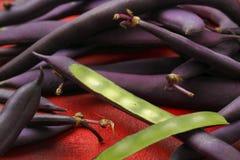 Blåa franska bönor (purpurfärgade bönor) Royaltyfri Bild
