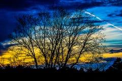 Blåa gula himlar Arkivfoto