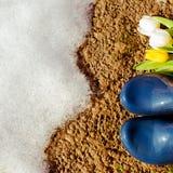 Blåa gummistöveler med tilips på den våta jordningen arkivfoton