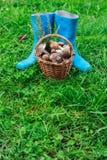 Blåa gummistöveler och en korg mycket av champinjoner på en gräsbakgrund royaltyfria foton