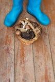 Blåa gummistöveler och en korg mycket av champinjoner på en träbakgrund royaltyfri bild