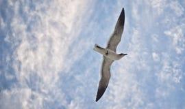 Blåa himlar Fotografering för Bildbyråer