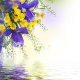 Blåa iriers med gula tusenskönor Arkivfoto