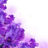 Blåa irises mot ett grönt gräs Arkivfoto