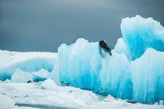 Blåa isberg i Jokulsarlon den is- lagun, södra Island Arkivbilder