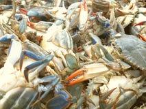 blåa krabbor Arkivfoto