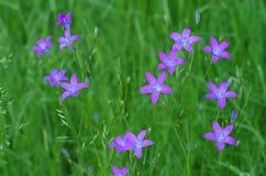 Blåa lösa blommor i skogen Arkivbild