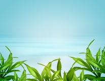 blåa leafs för bakgrundsbambu över Arkivfoton