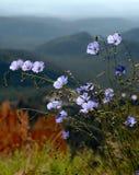 blåa lilla vildblommar Fotografering för Bildbyråer