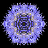 Blåa Mandala Flower Kaleidoscope Isolated på svart Arkivbild