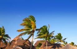 blåa mayan gömma i handflatan tropiska trees för den riviera skysunroofen Arkivbilder