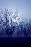 blåa moodtrees Royaltyfri Foto