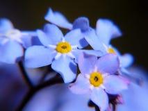 Blåa och gula blommor arkivbild