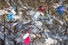 Blåa och rosa tumvanten hänger på filialer med snö toys för spheres för bakgrundsjul exponeringsglas vita isolerade Fotografering för Bildbyråer