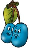 blåa plommoner två royaltyfri illustrationer
