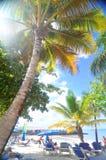 blåa pojkeskrivbordflickor ser sittande surfa för havet Royaltyfri Foto