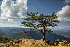 Blåa Ridge Mountains från RavensRoost förbiser Royaltyfri Fotografi
