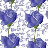 Blåa rosor Fotografering för Bildbyråer