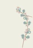 Blåa sakura blommor Arkivbild