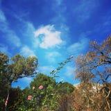 blåa skies Royaltyfria Bilder