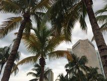 Blåa soliga himlar och sikter av en modern skyskrapabyggnad i i stadens centrum Miami till och med palmträd arkivbilder