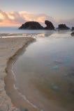 Blåa späckjelliyfish på soluppgång Royaltyfria Bilder