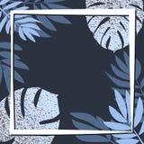 Blåa tropiska sidor på den mörka bakgrunden Arkivbilder