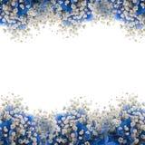 Blåa vanlig hortensia Arkivbilder