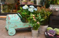 Blåa vanlig hortensia och blommor i en shoppa Arkivbild