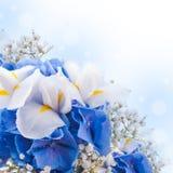 Blåa vanlig hortensia och vita irises Arkivbild