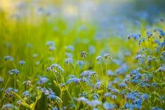 blåa vildblommar Grön bakgrund Naturlandscae n Arkivbild