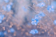 Blåa vildblommor på en härlig rosa tappningbakgrund Selektiva mjuka bakgrunder Arkivfoton